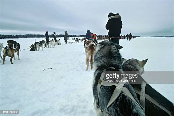 The Iditarod sled dog race in Alaska United States An 1800km long sled dog race A musher with his sled dogs on the frozen Yukon river which runs from...