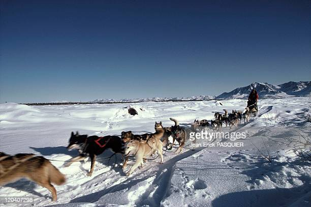 The Iditarod sled dog race in Alaska United States An 1800km long sled dog race Musher and his sled dogs on the frozen Yukon river running from...