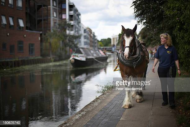 The Ilkeston a restored narrow boat is towed by Buddy a 13 year old Clydesdale horse on Regent's Canal on August 23 2012 in London England The 100...