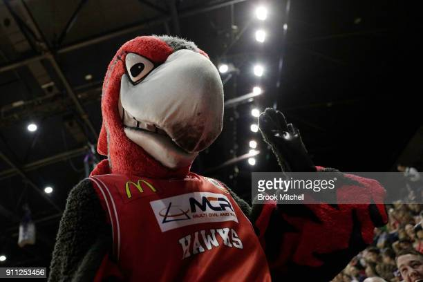 The Illawarra mascot is pictured during the round 16 NBL match between the Illawarra Hawks and the Cairns Taipans at Wollongong Entertainment Centre...