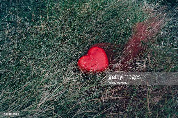 the injured heart