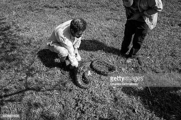 'The Invasives' Scenes around the Florida Everglades on February 19 2014 in Homestead Florida Time writer Brian Walsh handles a Burmese Python