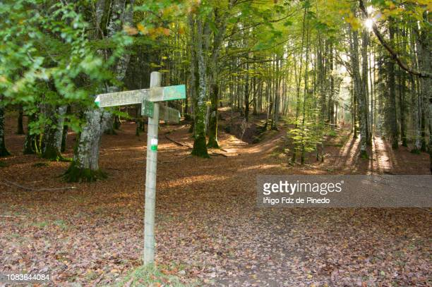the irati forest, autumn, ochagavía, navarra, spain. - comunidad foral de navarra fotografías e imágenes de stock