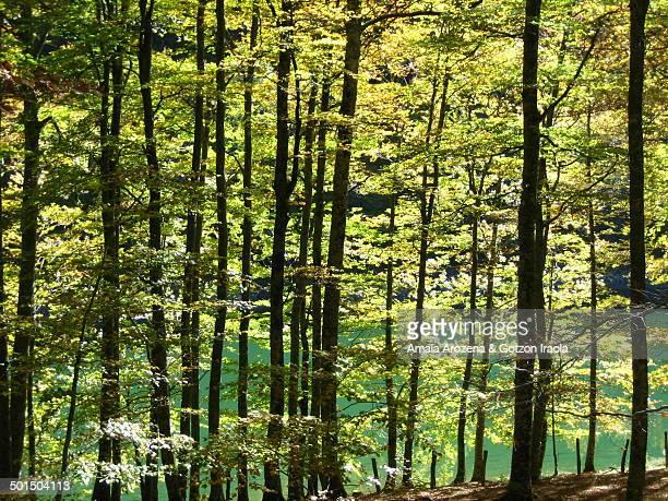 the irati forest - comunidad foral de navarra fotografías e imágenes de stock