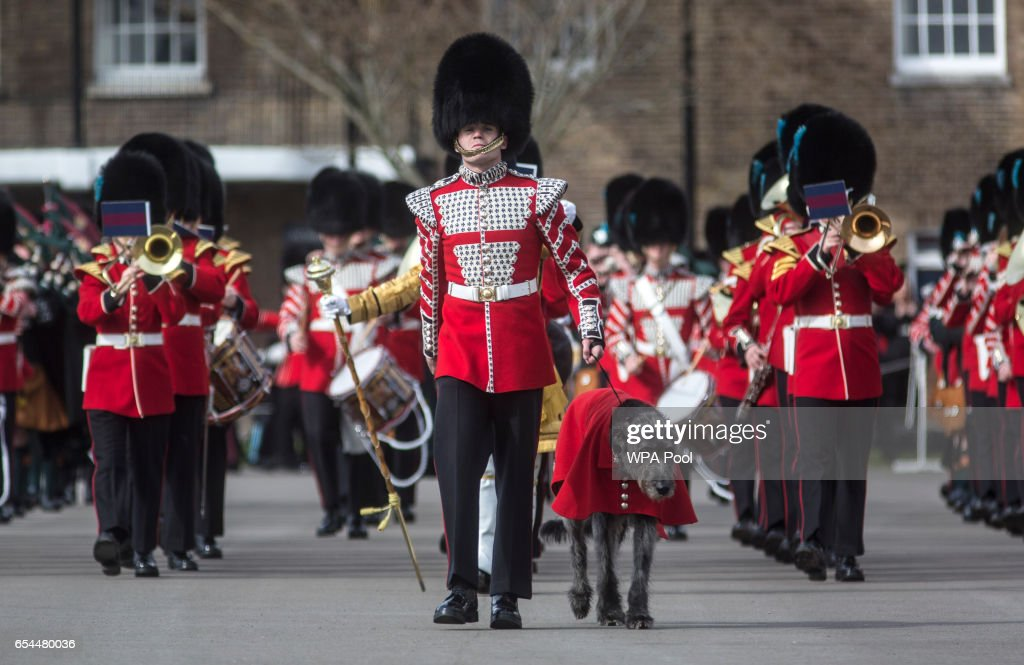 The Irish wolf hound Domnall mascot of the Irish Guards marches onto the parade square with soldiers of the 1st battalion Irish Guards during their St Patricks day parade on March 17, 2017 in London, England.