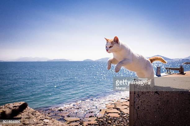 The island cat by seaside