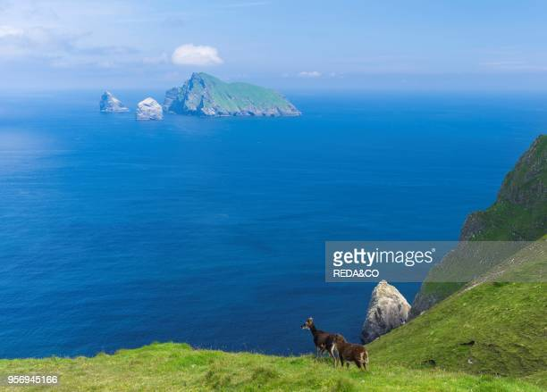 The islands of St Kilda archipelago in Scotland. The island of Hirta. View of Boreray and Stac Lee and Stac Armin. It is one of the few places...