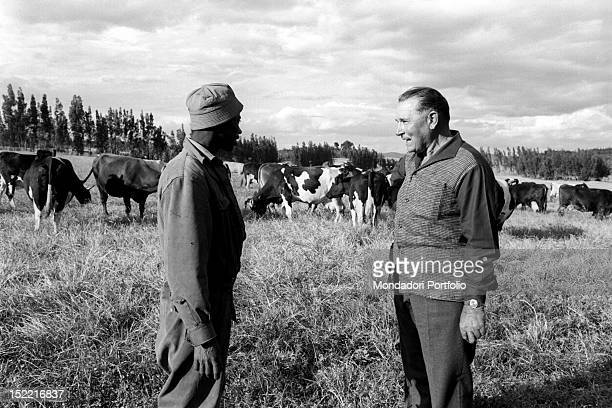 The Italian ex plumber Antonio Stocchetti breeding cows for the production of milk and butter in Ethiopia Addis Ababa November 1966