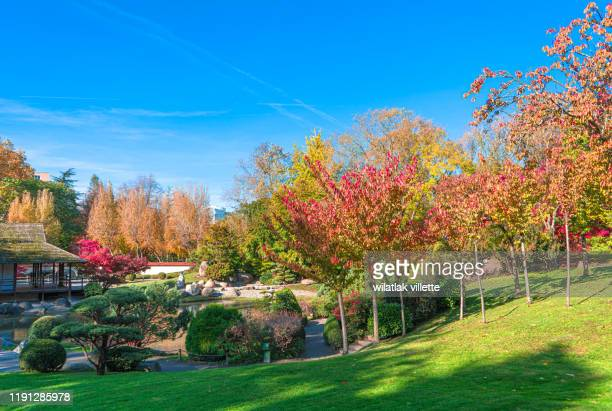 the japanese garden in toulouse,nice outdoor scene. - toulouse stock pictures, royalty-free photos & images