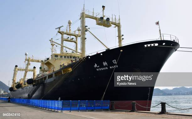 The Japanese whaling vessel Nisshin Maru returns to the southwestern port of Shimonoseki in Yamaguchi Prefecture on March 31 after conducting what...