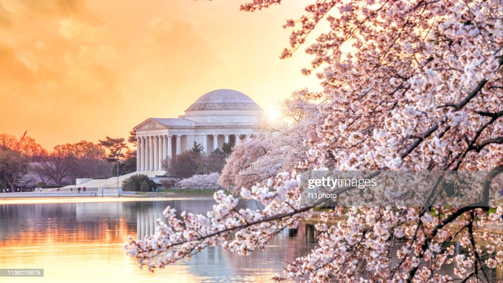 the Jefferson Memorial during the Cherry Blossom Festival : Stock Photo