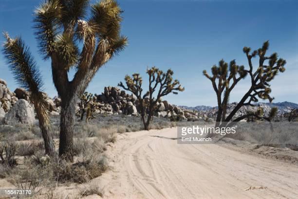 The Joshua Tree National Park in the Mojave Desert California circa 1960