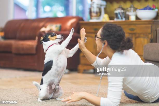 the joy of living with pets - stunt stock pictures, royalty-free photos & images