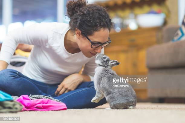 the joy of living with pets - lagomorphs stock pictures, royalty-free photos & images