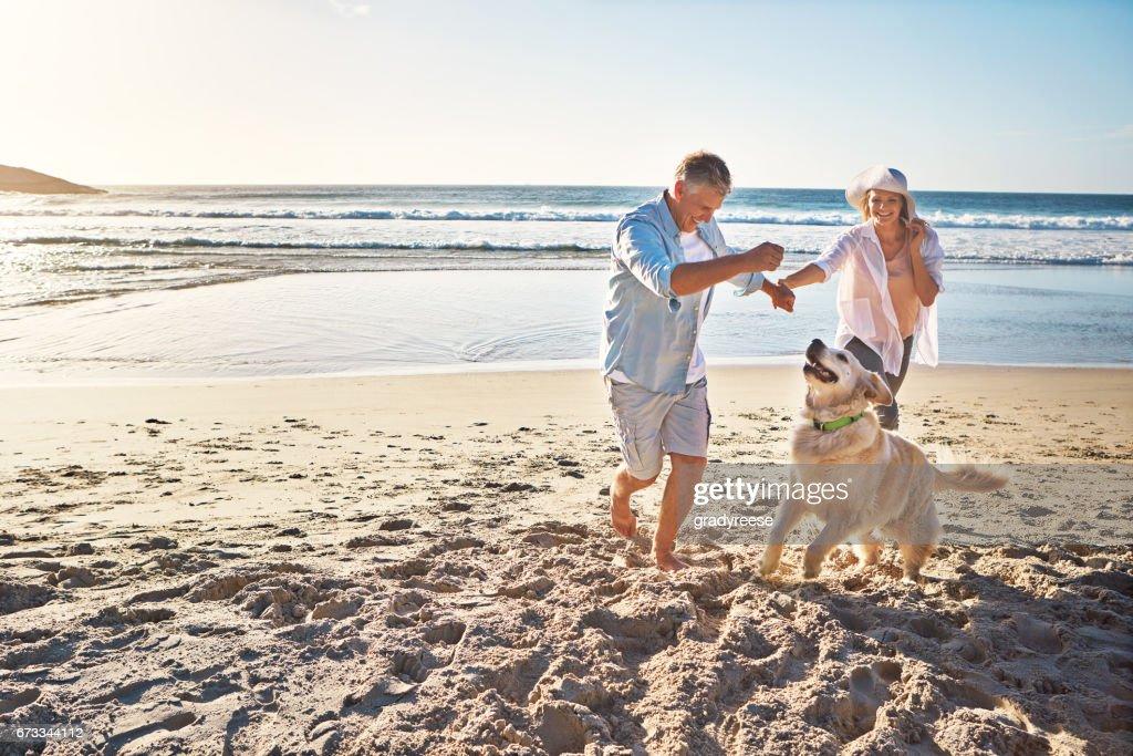 The joy of romping on a sandy beach! : Stock Photo