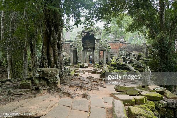 the jungle slowly reclaiming angkorian temples in cambodia - famous people stock photos and pictures