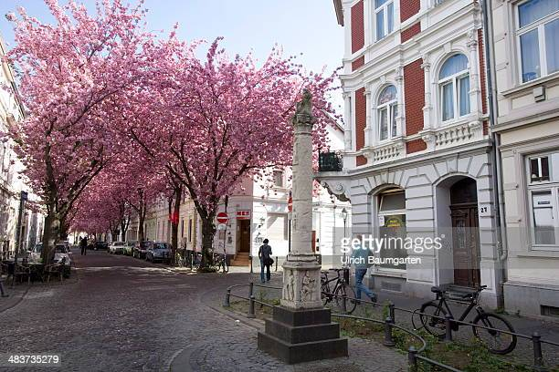 The Jupiter column an archaeological pieces from the Roman period is pictured in front of Cherry blossoms on April 02 2014 in Bonn Germany