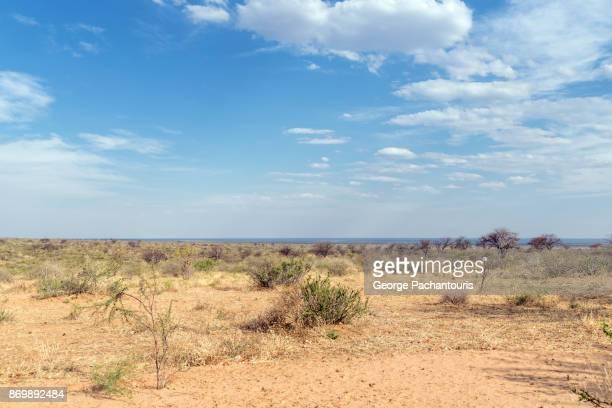 the kalahari desert - savannah stock pictures, royalty-free photos & images