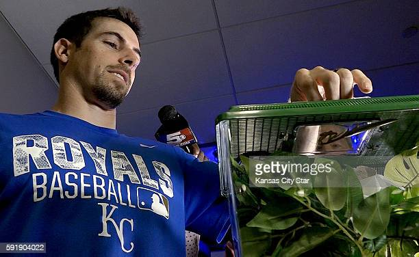 The Kansas City Royals' Billy Burns shows Rally Mantis Jr and his new cage before a game against the Minnesota Twins on Thursday Aug 18 at Kauffman...