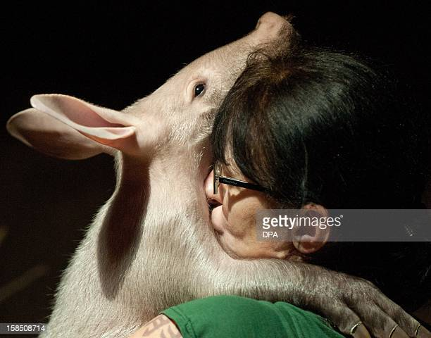 The keeper kisses the yet unnamed male aardvark on December 18 2012 during a press conference at Berlin Zoo The keeper bottle feeds the animal AFP...