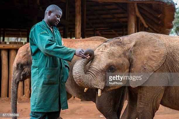 The keeper of the Elephant Orphanage Project and orphan elephant at the Lilayi Elephant Nursery in Lusaka Zambia on 18 July 2016 Keepers taking care...