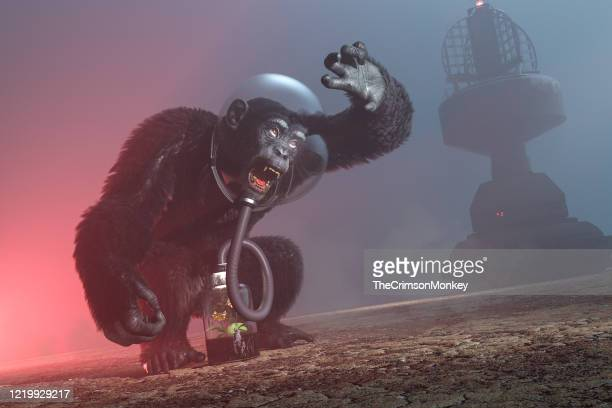 the keeper of the flame - great ape stock pictures, royalty-free photos & images