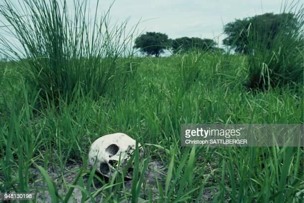 The killing fields of Ayod
