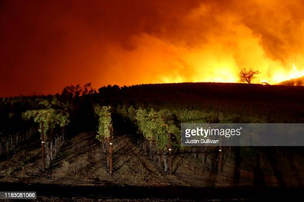 The Kincaide Fire burns near a vineyard on October 24 2019 in Geyserville California Fueled by high winds the Kincaide Fire has burned over 7000...
