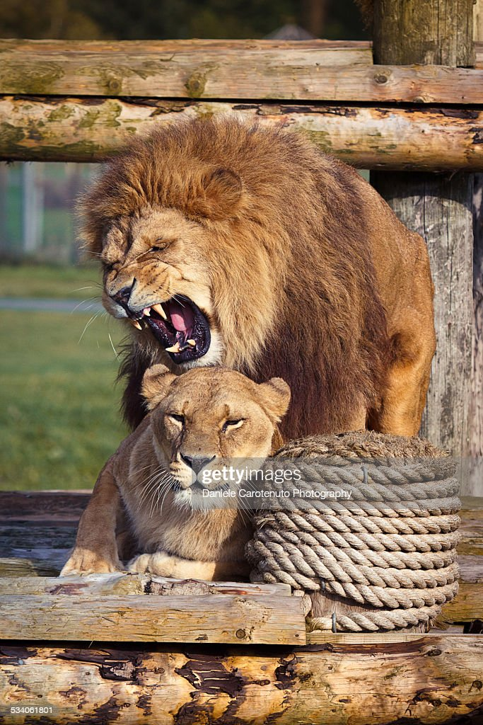 The king and his queen : Stock Photo