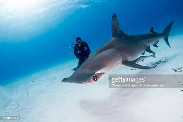 the king of the sea - south bimini stock photos and pictures