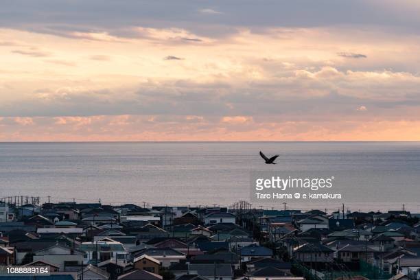 The kite flying on the residential town by the sea in Kamakura in Japan