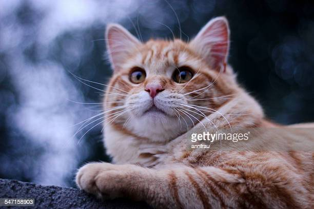 the kitty - annfrau stock pictures, royalty-free photos & images