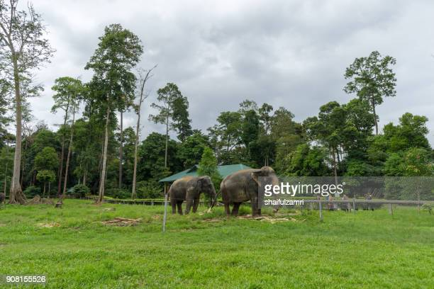 The Kuala Gandah Elephant Conservation Centre is an elephant sanctuary located in Pahang. The Centre was established in 1989 by the Malaysian Department of Wildlife.
