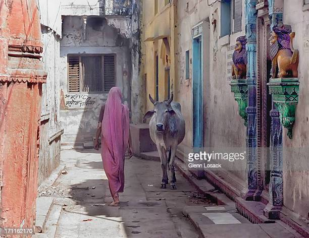 the lady and the cow - varanasi stock pictures, royalty-free photos & images