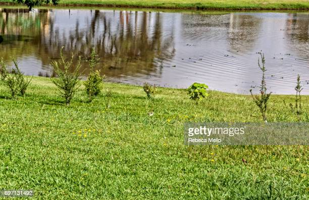 The lake in Botanical Garden, Curitiba