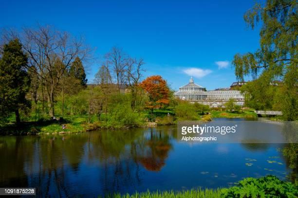 o lago no jardim botânico de copenhaga - jardim botânico - fotografias e filmes do acervo
