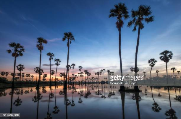 The land of sugar palm trees