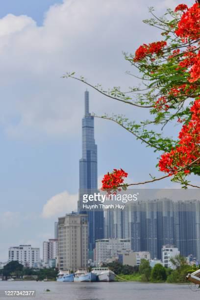 the landmark 81 building by phoenix flower season - saigon river stock pictures, royalty-free photos & images