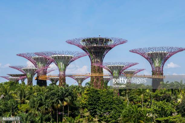 The landmark Supertrees at the Gardens by the Bay on 29 July 2017 in Singapore Singapore