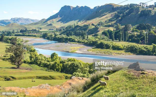 the landscape of te mata peak and tuki tuki river in hawke's bay region of new zealand. - ホークスベイ地域 ストックフォトと画像