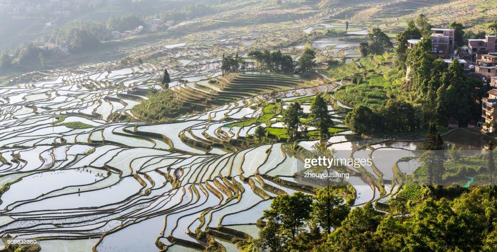 The landscape of terraced fields : Stock-Foto
