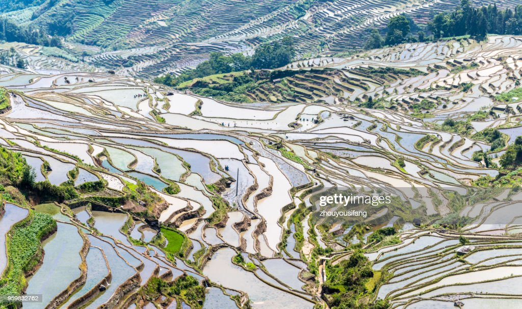 The landscape of terraced fields : Foto stock
