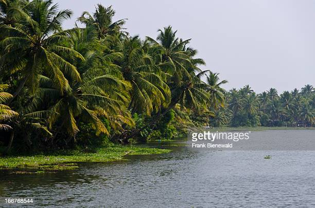 KOLLAM BACKWATERS KERALA INDIA The landscape of the backwaters in Kerala ist cut by countless little canals