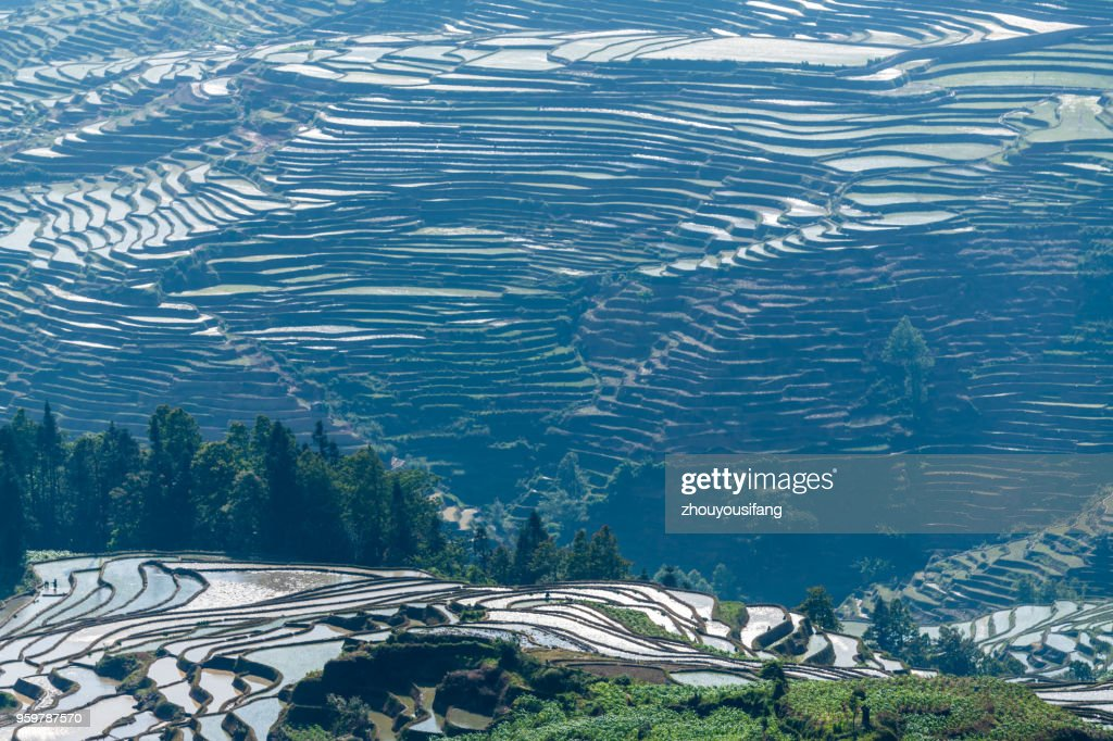 The landscape of the terraced fields : Stock Photo