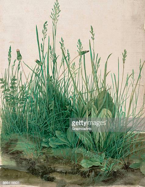 The Large Piece of Turf by Albrecht Durer watercolor and gouache on vellum 1503 From the Albertina Museum Vienna