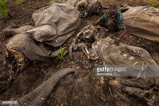 The largest mass killing of elephants in recent history took place at Bouba Ndjida National Park in North Cameroon close to the Chad and Central...