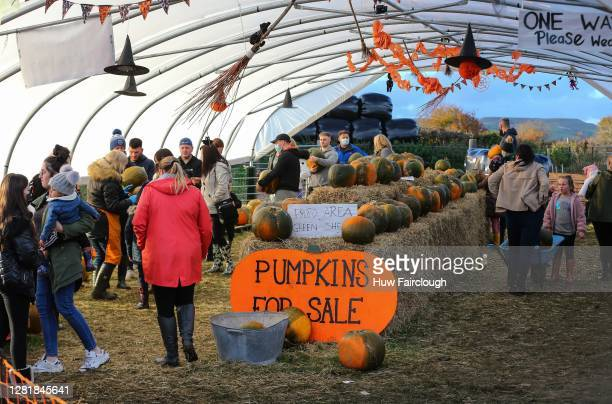 The last few customers collect pumpkins at Pencoed Farm in preparation for Halloween on October 23, 2020 in Cardiff, Wales. Pencoed Farm Pumpkins...
