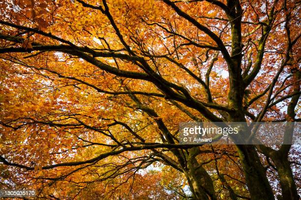 the last leaves of autumn - season stock pictures, royalty-free photos & images