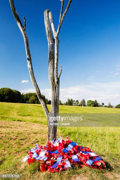 The last surviving tree from the battle at Newfoundland Memorial Park, Beaumont Hamel, commemorating Canadian losses in the Battle of the Somme in the First World War.