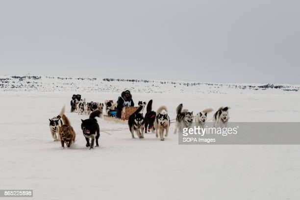 BAY INUKJUAK NUNAVIK QUEBEC CANADA The last two team of the day arriving in Inukjuak Since 2001 Ivakkak has been an event which honors the Husky dogs...